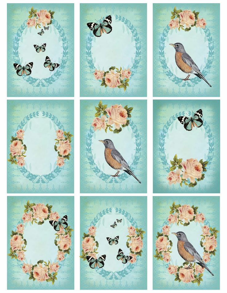 1000+ images about oiseaux, birds on Pinterest.