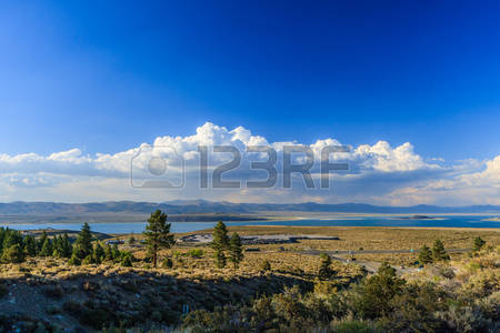 Vining Stock Photos, Pictures, Royalty Free Vining Images And.