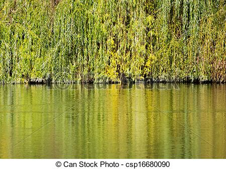 Stock Photographs of Colorful branches of the weeping willow.