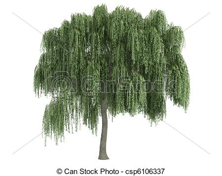 Salix Stock Illustration Images. 36 Salix illustrations available.