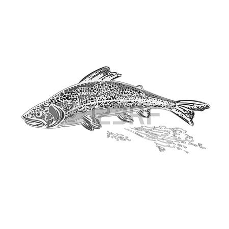 63 Salmo Stock Illustrations, Cliparts And Royalty Free Salmo Vectors.