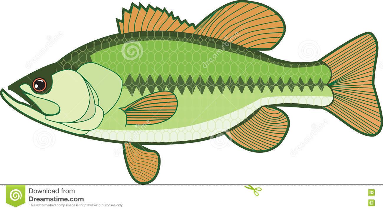 Royalty Free Stock Image: Rainbow trout/Fish. Image: 76699296.