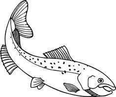 salmon drawing.