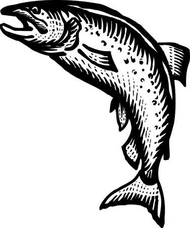 17 Salmon Black And White Icons Images.