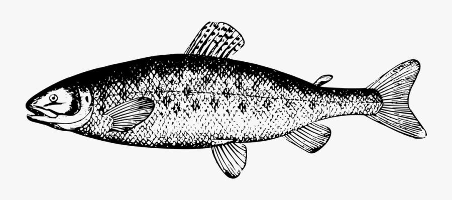 Transparent Salmon Clipart.