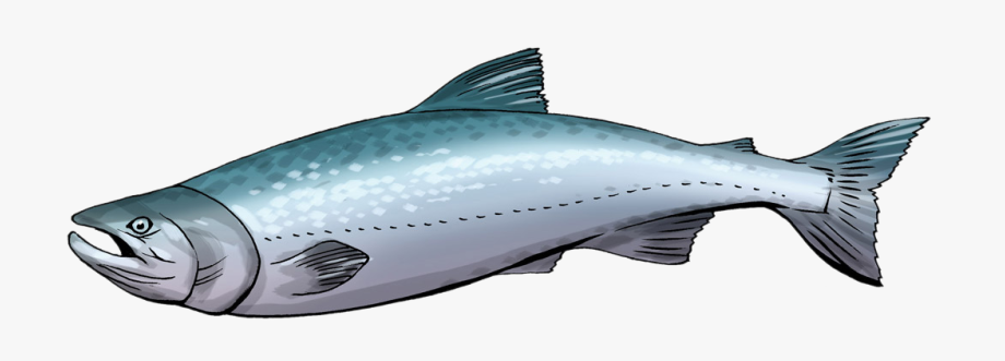 Cute Salmon Cliparts Free Download Clip Art On.