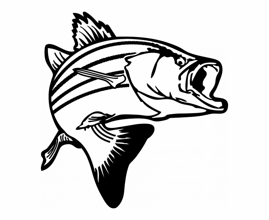 Salmon clipart black and white clipart images gallery for.