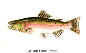 Pink salmon Illustrations and Clip Art. 357 Pink salmon royalty.