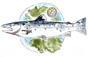 Lachs (salmon/salmo Salar) stock vectors.