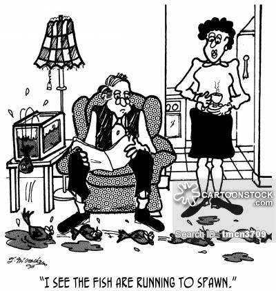 Salmon Run Cartoons and Comics.