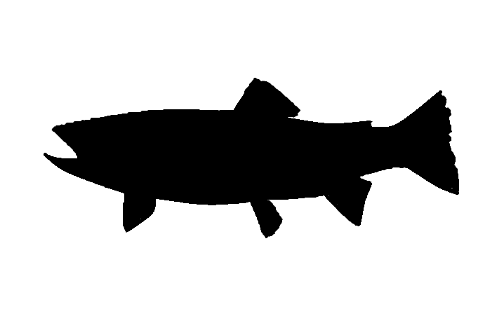 Trout Silhouette Salmon Clip art.