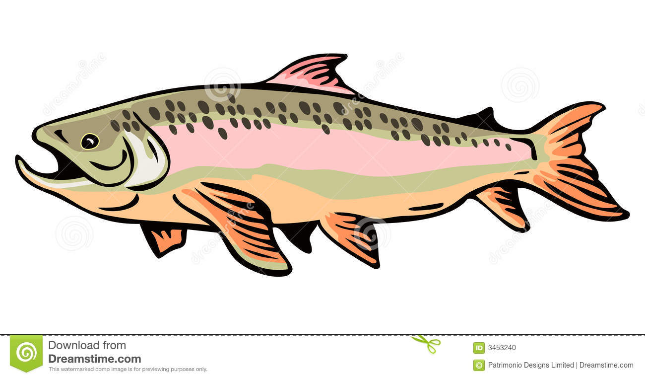 Brown Trout Stock Photo.