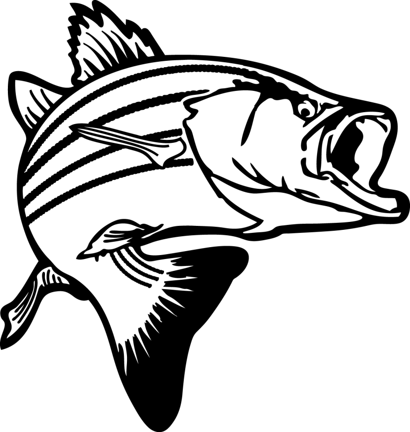 Trout clipart black and white.