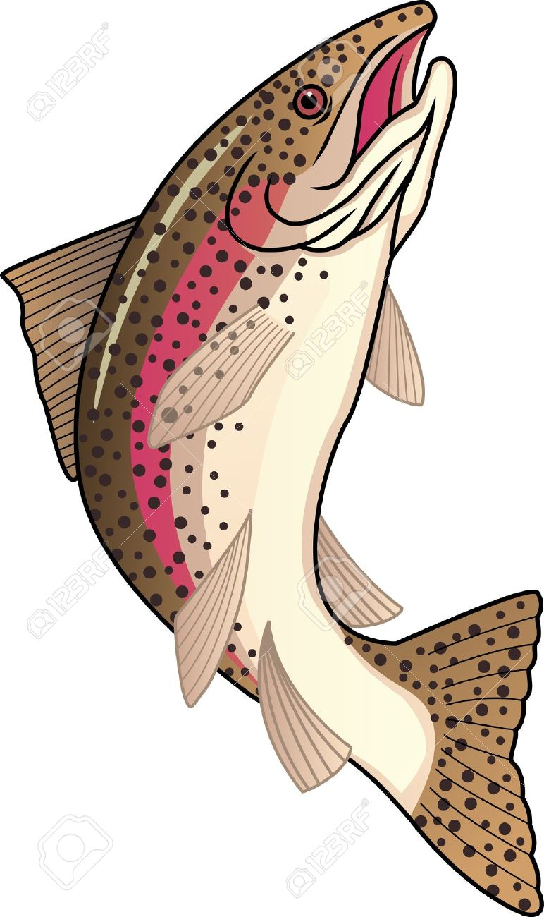 4,462 Trout Stock Vector Illustration And Royalty Free Trout Clipart.