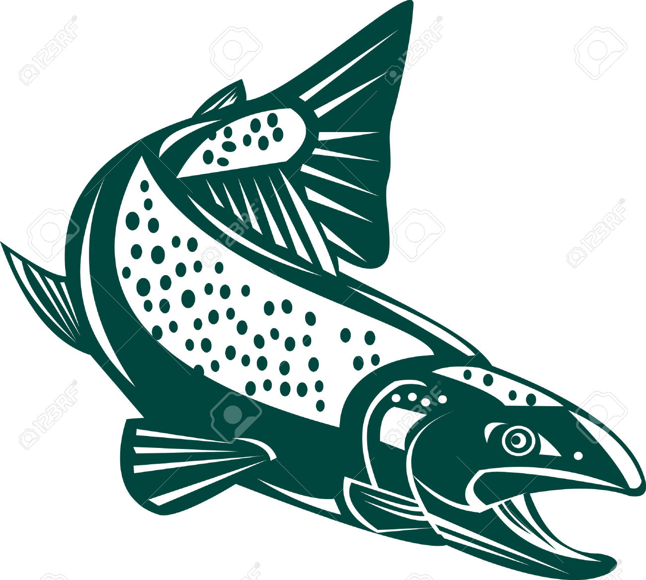 Trout Royalty Free Cliparts, Vectors, And Stock Illustration.