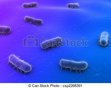 Salmonella Stock Illustration Images. 375 Salmonella illustrations.