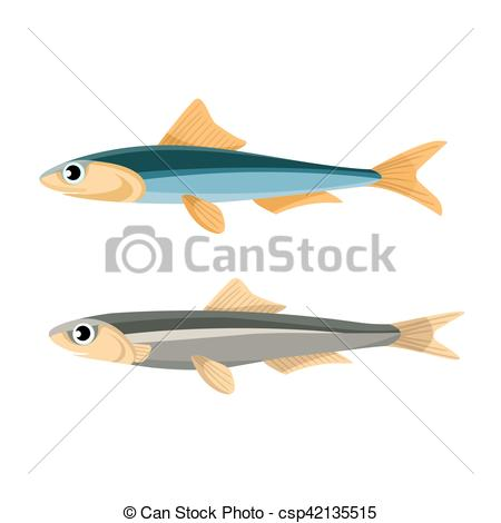 Vector Clip Art of Anchovy Fish Vector Illustration. Peruvian.