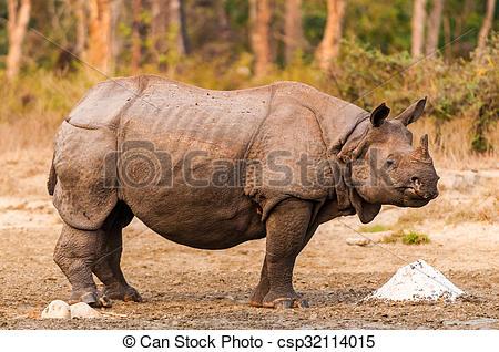 Stock Photography of Rhino at salt lick.