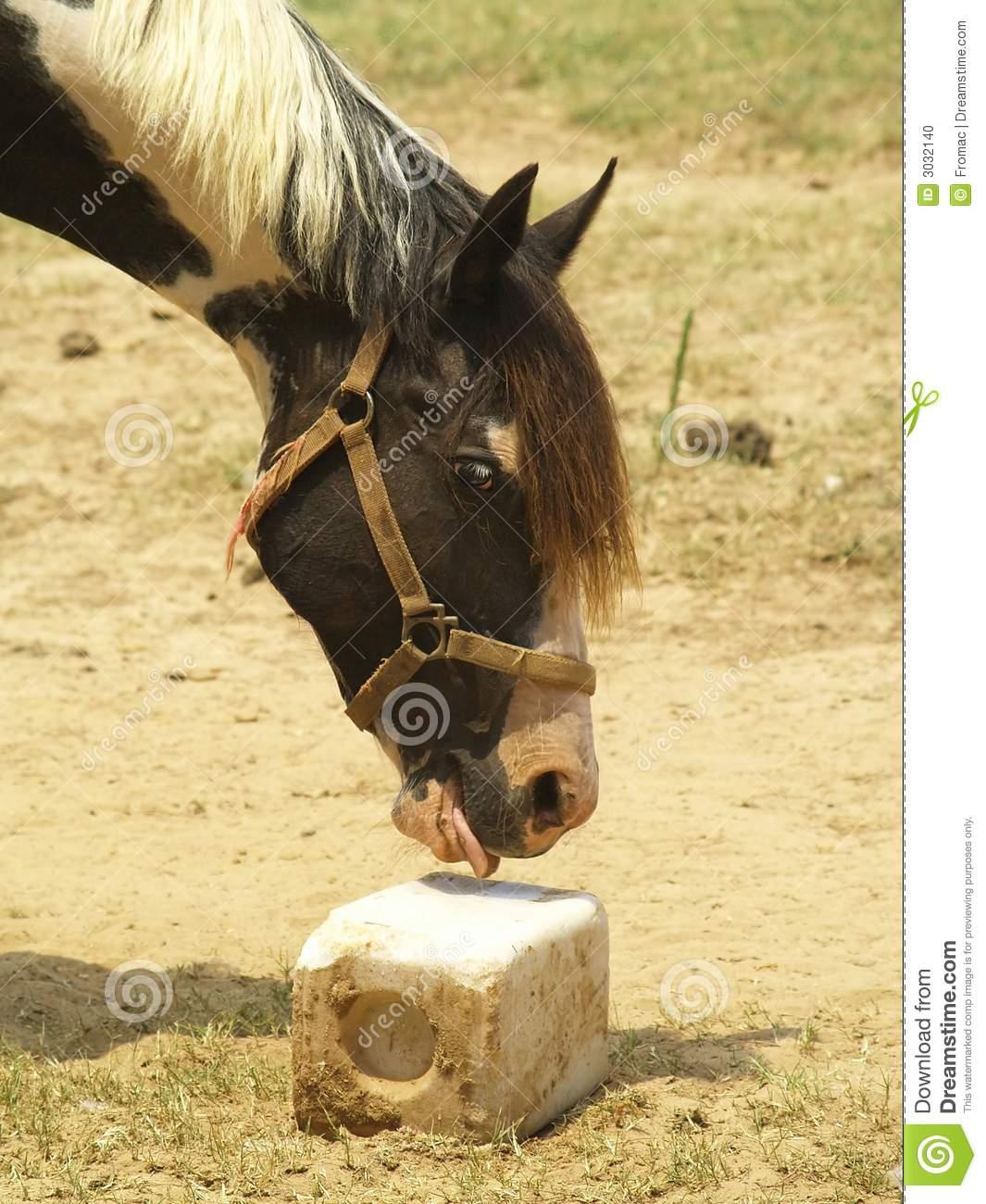 Horse At Salt Lick Stock Photo.