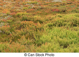 Salt marsh Stock Photos and Images. 1,012 Salt marsh pictures and.