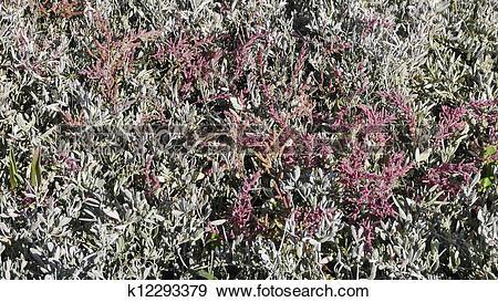 Stock Photograph of Salt marsh in autumn k12293379.