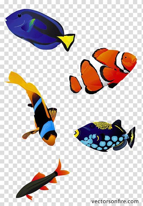 Koi Saltwater fish , Aquarium fish transparent background.