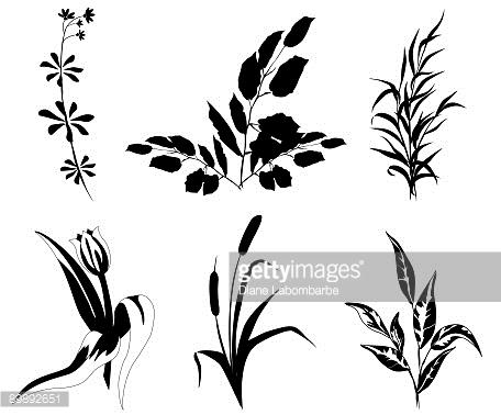 Salt Marsh Plant Clip Art Stock Illustrations And Cartoons.