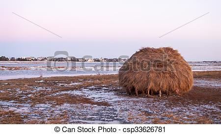 Pictures of Salt marsh haystack.