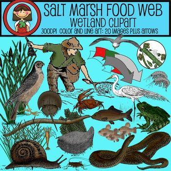 Clip Art Food Web.