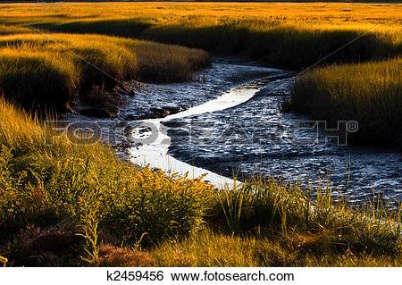 Stock Images of Salt marsh k2459456.