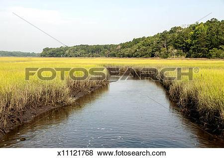Pictures of South Carolina salt marsh x11121768.