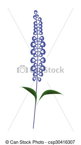 Vector Clipart of Purple Sage Flowers or Salvia Officinalis Flower.