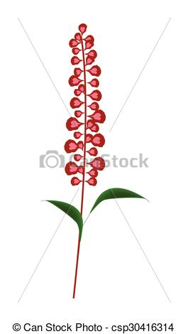 Vector Clip Art of Scarlet Sage Flowers or Salvia Splendens Flower.