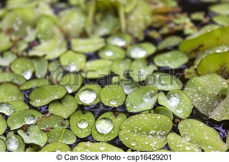 Stock Photography of Water Butterfly Wings.
