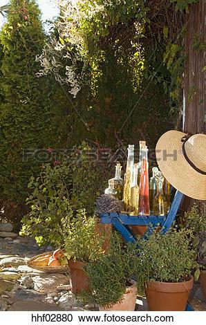 Stock Photography of Austria, Salzburger Land, Herb garden.