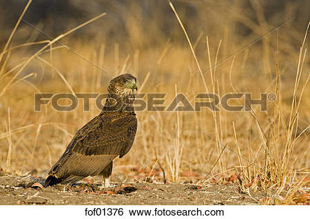 Stock Images of Africa, Sambia, Close.