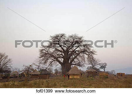 Stock Photograph of Africa, Sambia, Baobab Tree and Thatched huts.