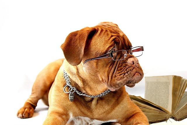 Free photo Snout Breed Doggy Dog Dane Animal Clip Art Coat.