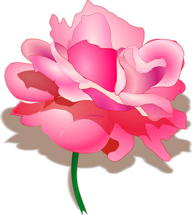 Free vector graphic: Rose, Rosa, Flower, Pink, Beautiful.