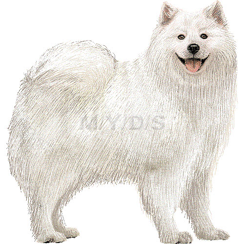 Samoyed clipart graphics (Free clip art.