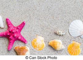 Stock Image of colorfull Sea shells sand board.