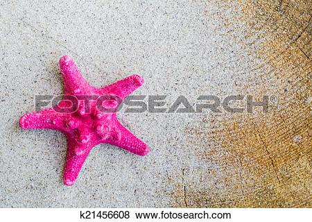 Pictures of Sea shell sand board k21456608.