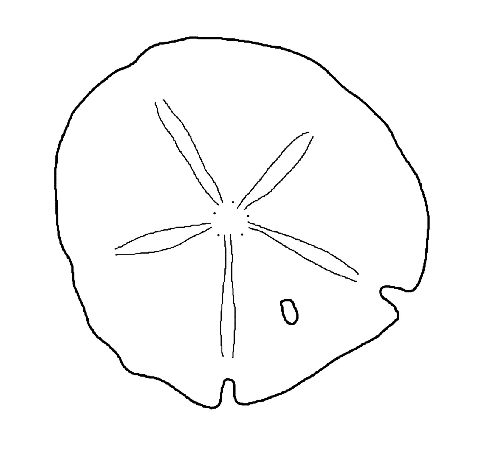 This is best Sand Dollar Clip Art #8012 Sand Dollar Outline.