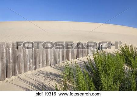 Stock Images of Wooden fence and green shrubs on sand dune.