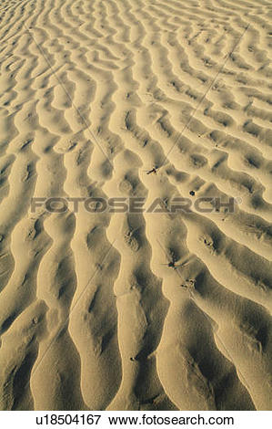 Picture of Sand formations in the Great Sand Hills, Saskatchewan.
