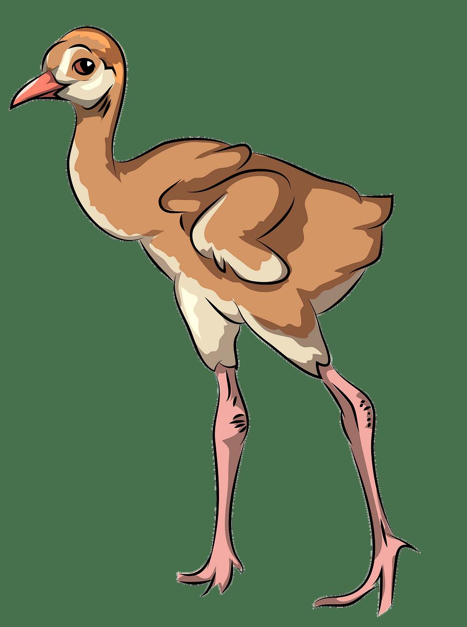 Sandhill crane chick clipart. Free download..