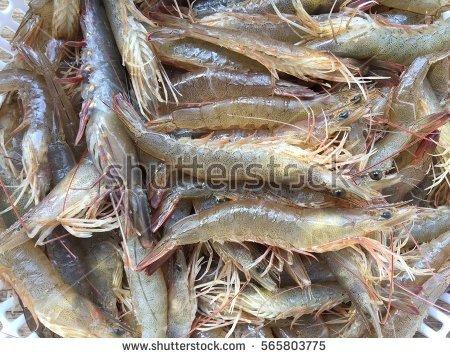 Fresh Shrimp Stock Photo 565163134.
