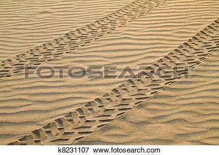 Picture of ATV Tracks On Sand k8231107.
