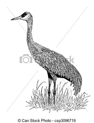 Stock Illustration of Sandhill Crane.