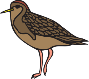 Sandpiper Clip Art at Clker.com.